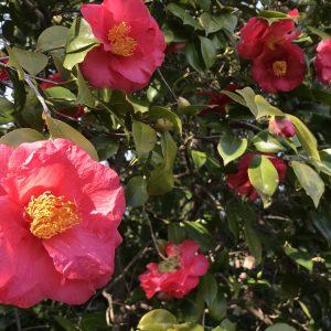 お花見の季節がやってまいりました🌸🙌🏻